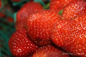 strawberriescmorgan