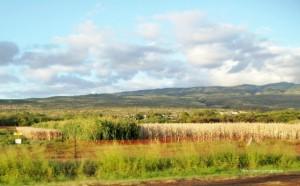 monsanto corn fields