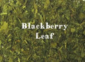 blackberry-leaf__large