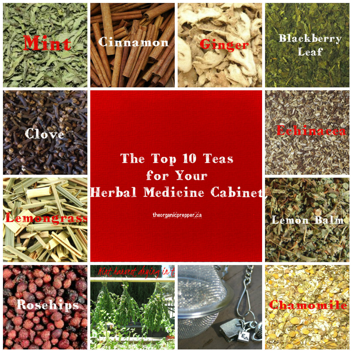Teas for Your Herbal Medicine Cabinet - The Organic Prepper