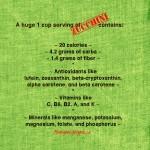 zucchini info