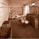 root-cellar