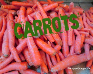 What to do with 25 pounds of carrots