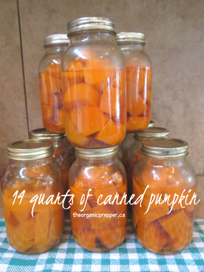 Learn how to can pumpkin HERE . I left my pumpkin totally without ...