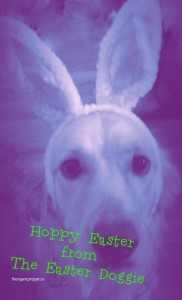 Bella the Easter Bunny card