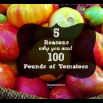 5 reasons why you need 100 pounds of tomatoes