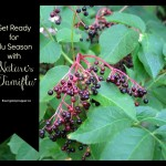 Get ready for flu season with elderberry extract