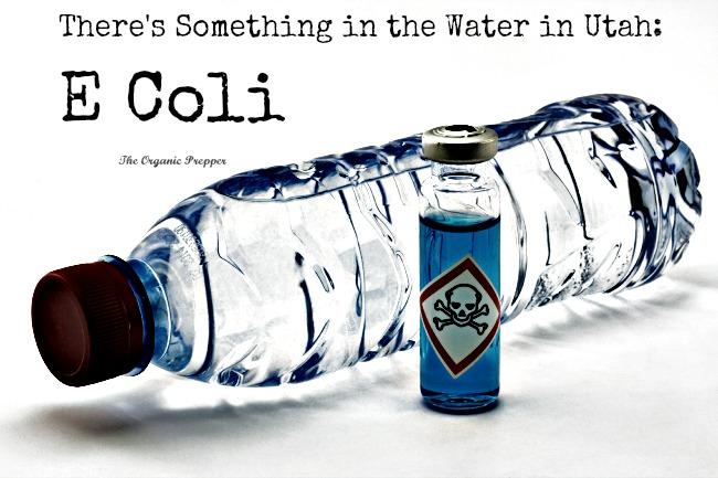 e coli in water - photo #1