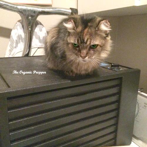Cat on the dehydrator
