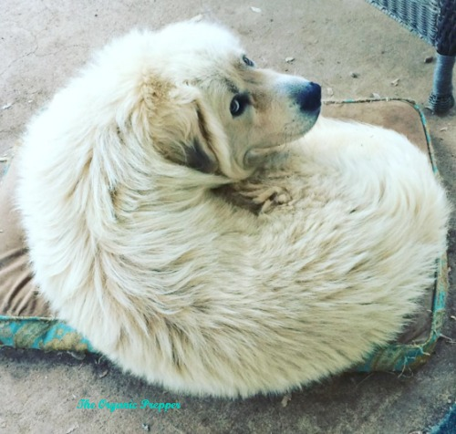 Thor's dog bed