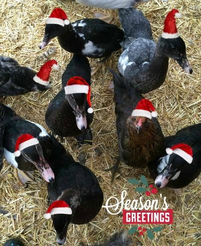 Merry Christmas from Birdland