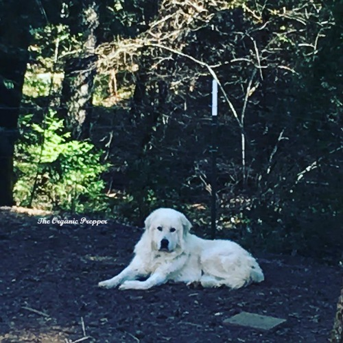 Thor in the backyard op