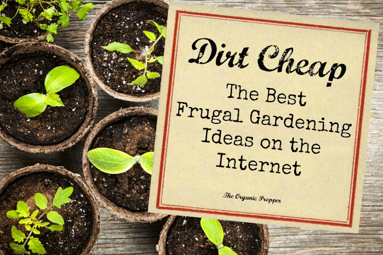 dirt cheap the best frugal gardening ideas on the internet the organic prepper