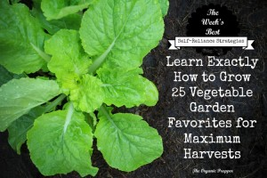 Learn Exactly How to Grow 25 Vegetable Garden Favorites for Maximum Harvests