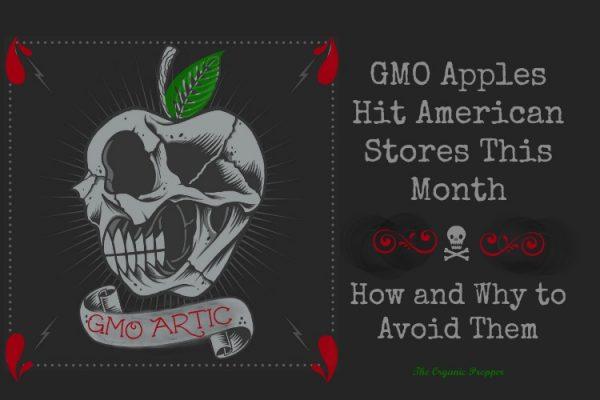 GMO Arctic Apples