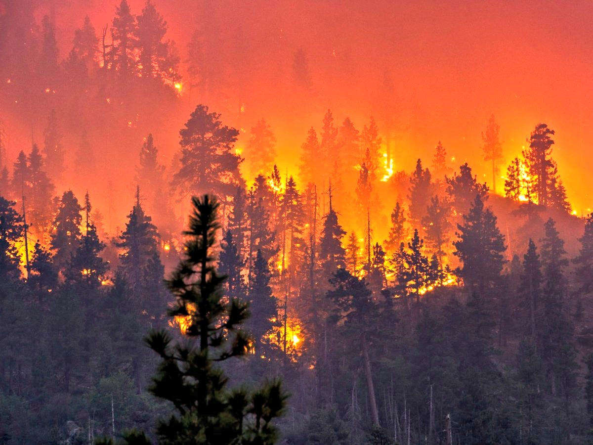 15 Videos Of The California Wildfires The Organic Prepper