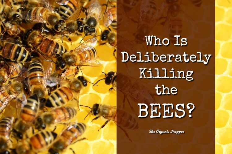 Why are people deliberately killing the bees in a variety of locations across the country?