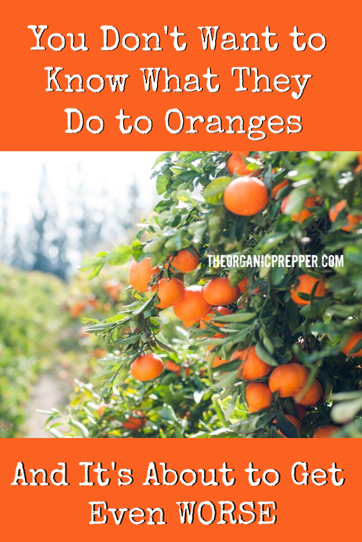 You Don\'t Want to Know What They Do to Oranges (And It\'s About to Get Even Worse)