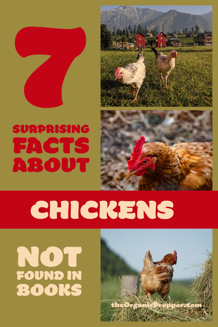 7 Surprising Facts About Chickens Not Found in Books