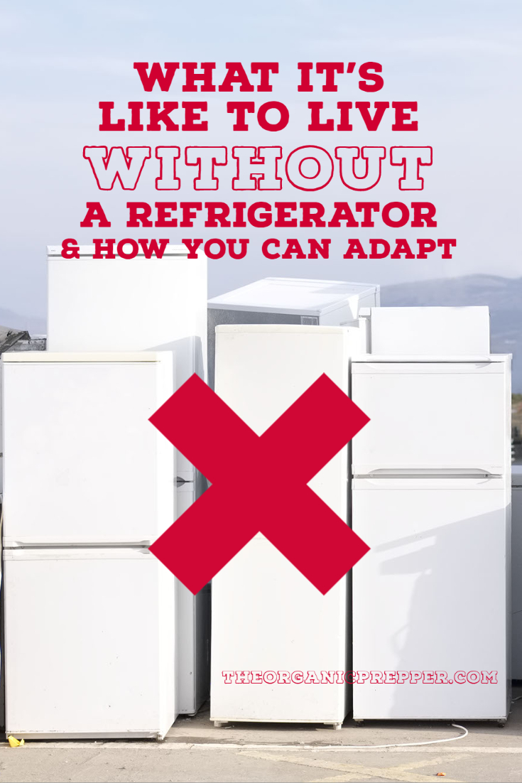 What It\'s Like to Live Without a Refrigerator and How to Adapt