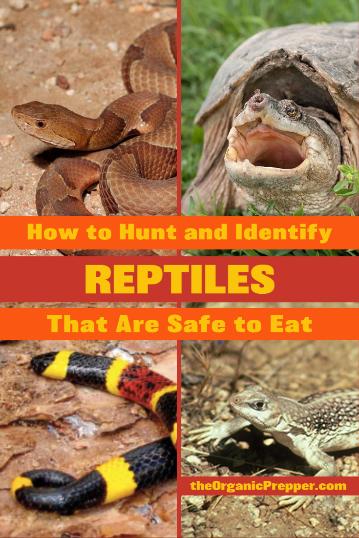 How to Hunt and Identify Reptiles That Are Safe to Eat