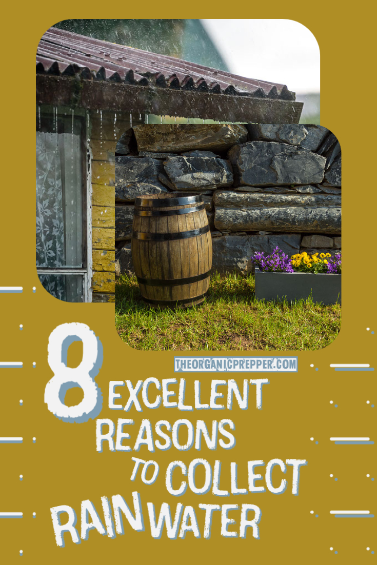 8 Reasons You Should Be Collecting Rainwater