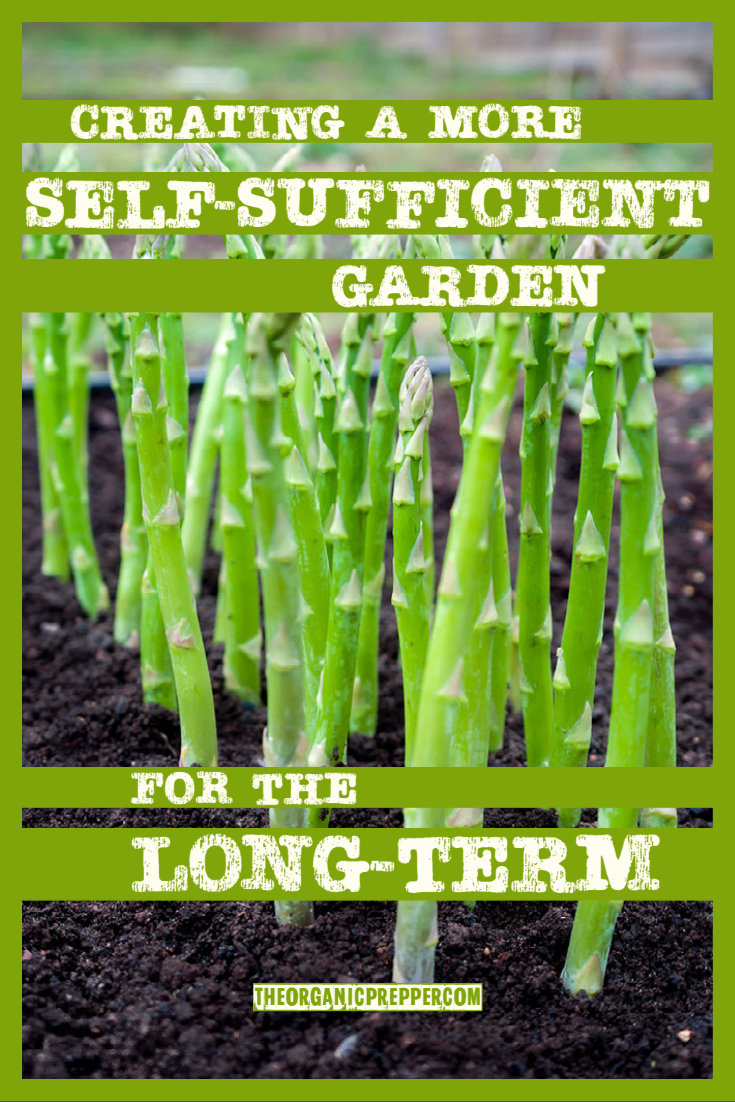 Creating a More Self-Sufficient Garden for the Long-Term