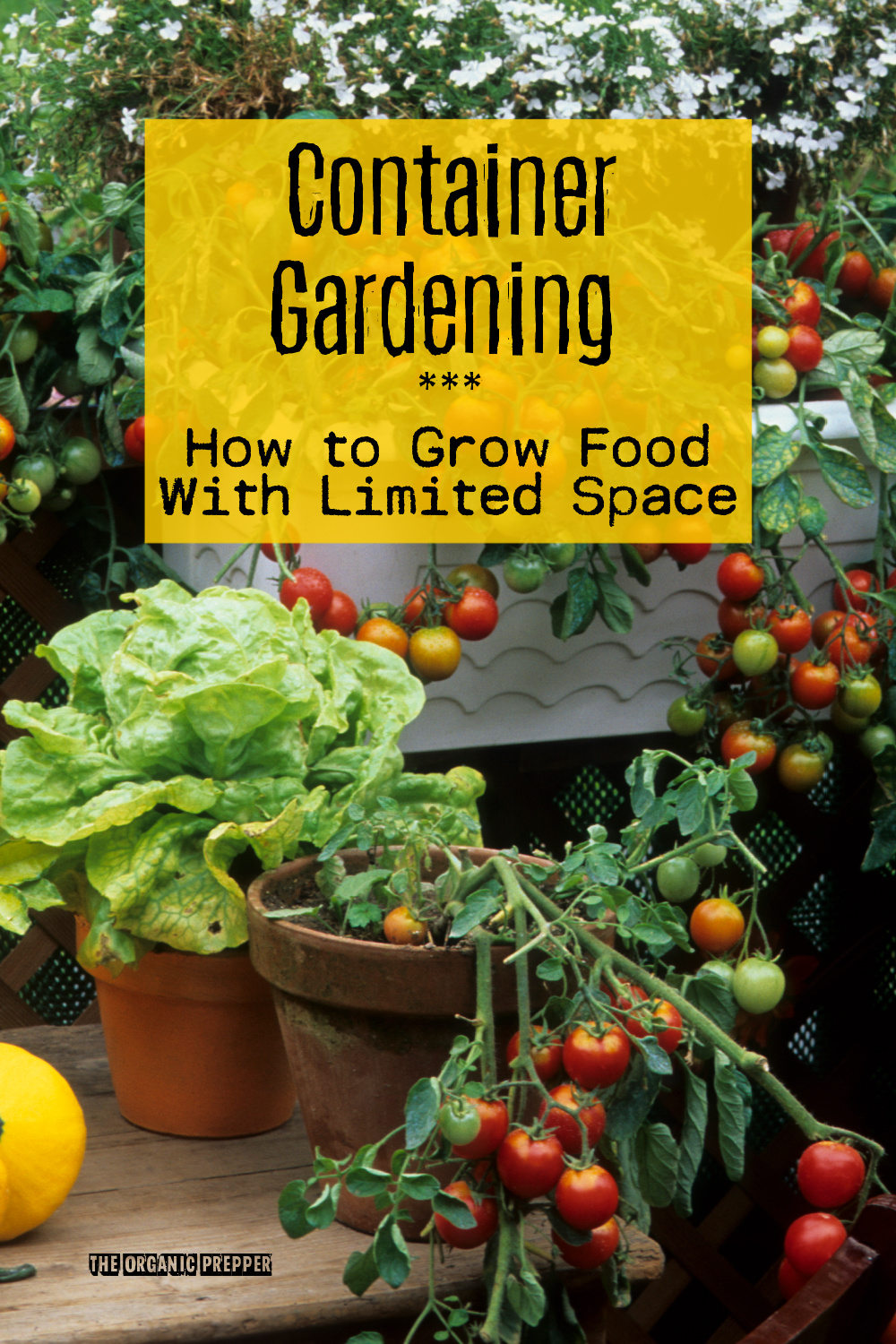 Container Gardening: How to Grow Food With Limited Space
