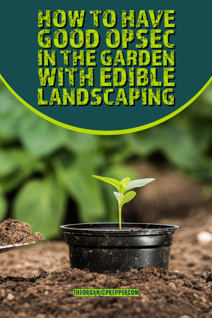 How to Have Good OPSEC in the Garden With Edible Landscaping