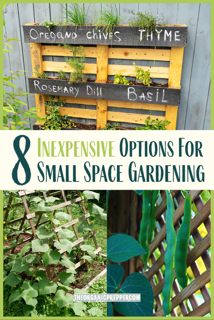 8 Inexpensive Options for Small Space Gardening