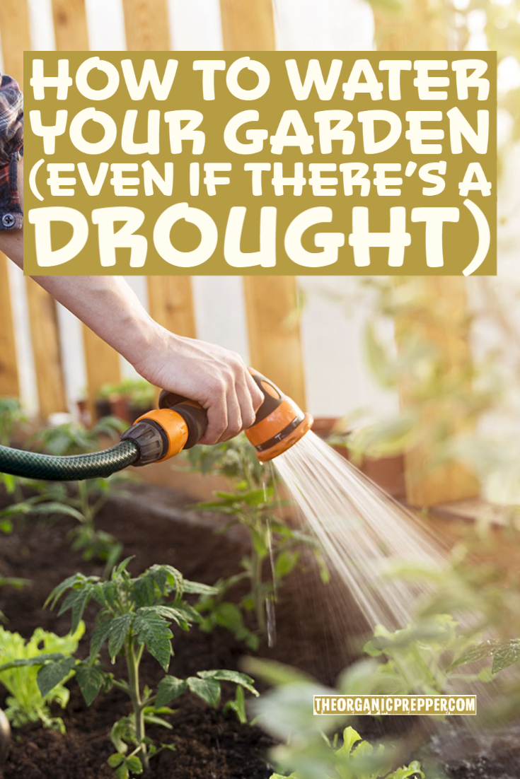 How to Water Your Garden (Even If There\'s a Drought)