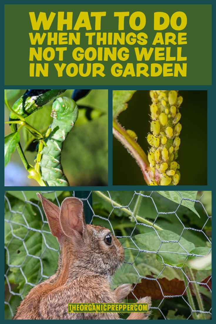 What to Do When Things Are Not Going Well in Your Garden