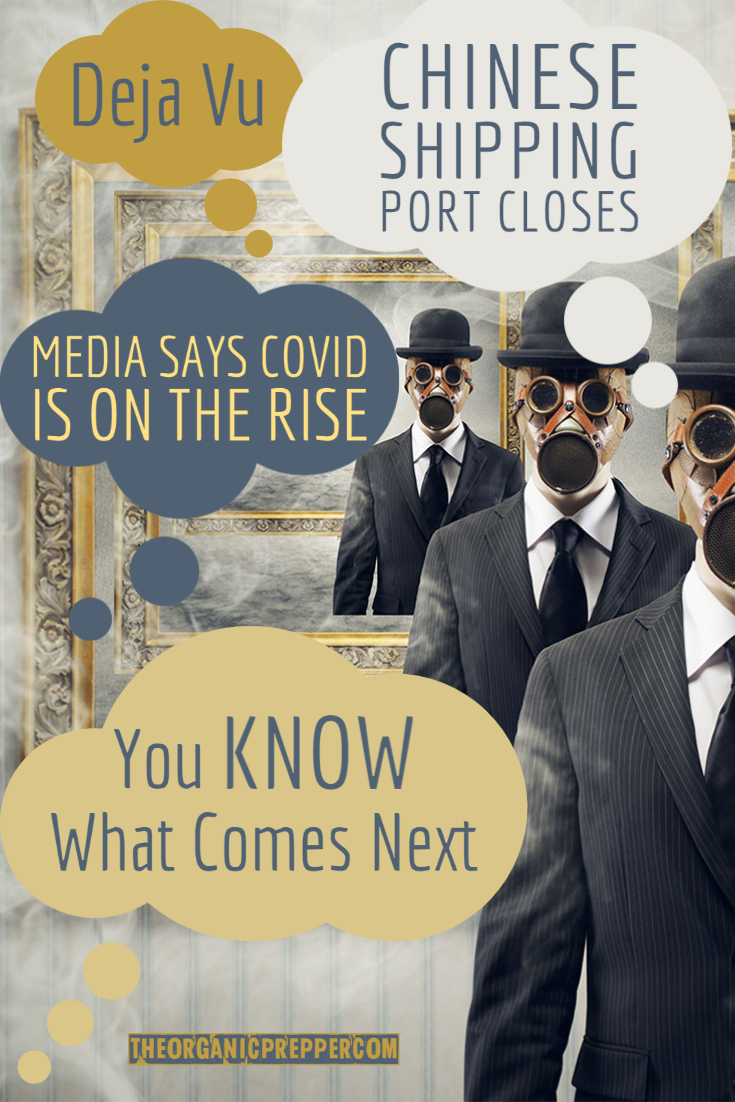 Deja Vu: Chinese Shipping Port Closes, Media Says Covid Is on the Rise...You KNOW What Comes Next