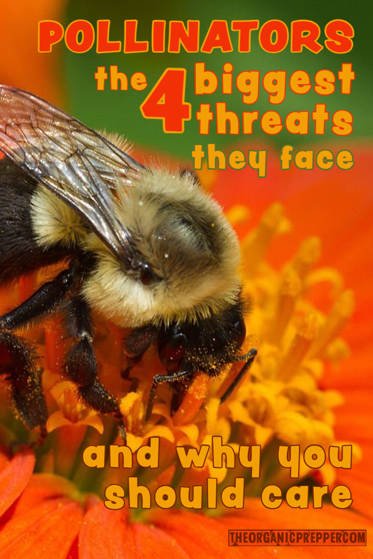 Pollinators, the 4 Biggest Threats They Face, and Why You Should Care